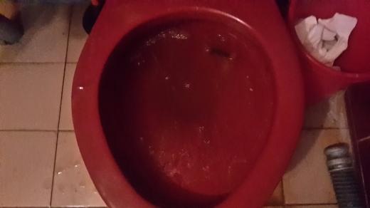 龜山區抽水肥馬桶不通水管包通
