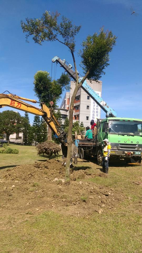 樹木移植 雲林