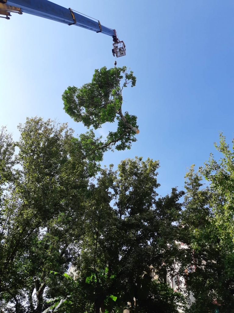 樹木修剪 嘉義