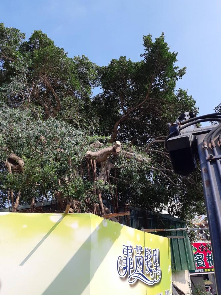 樹木修剪 雲林