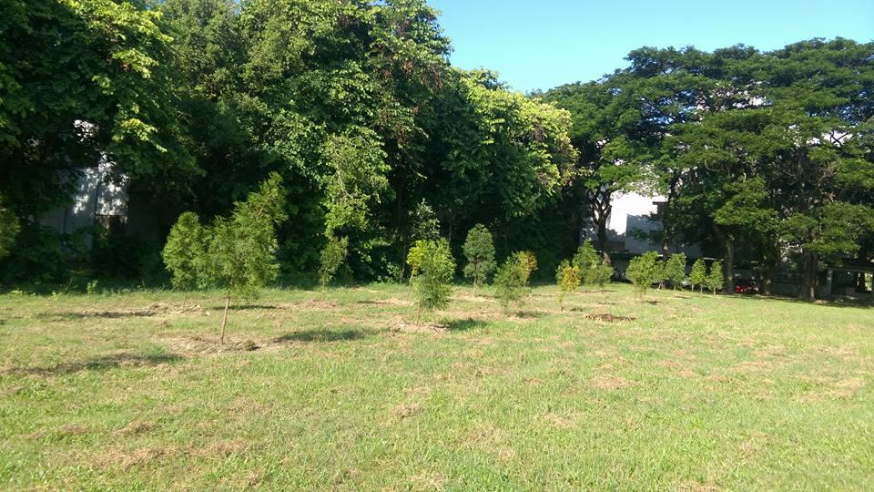植樹種樹  雲林