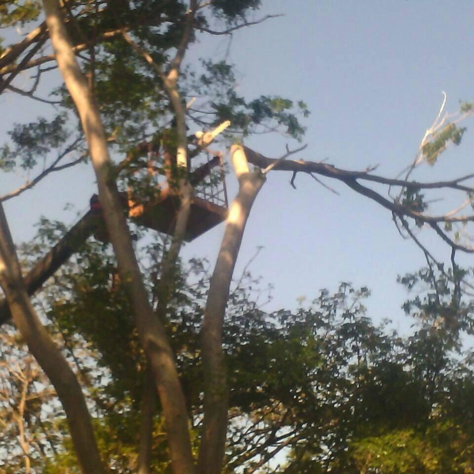 危樹處理 雲林
