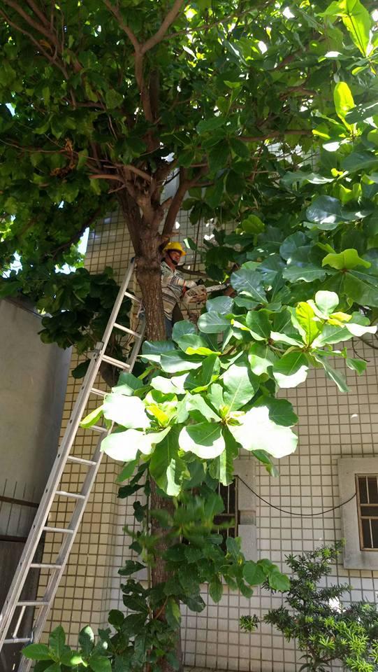 庭園維護雲林