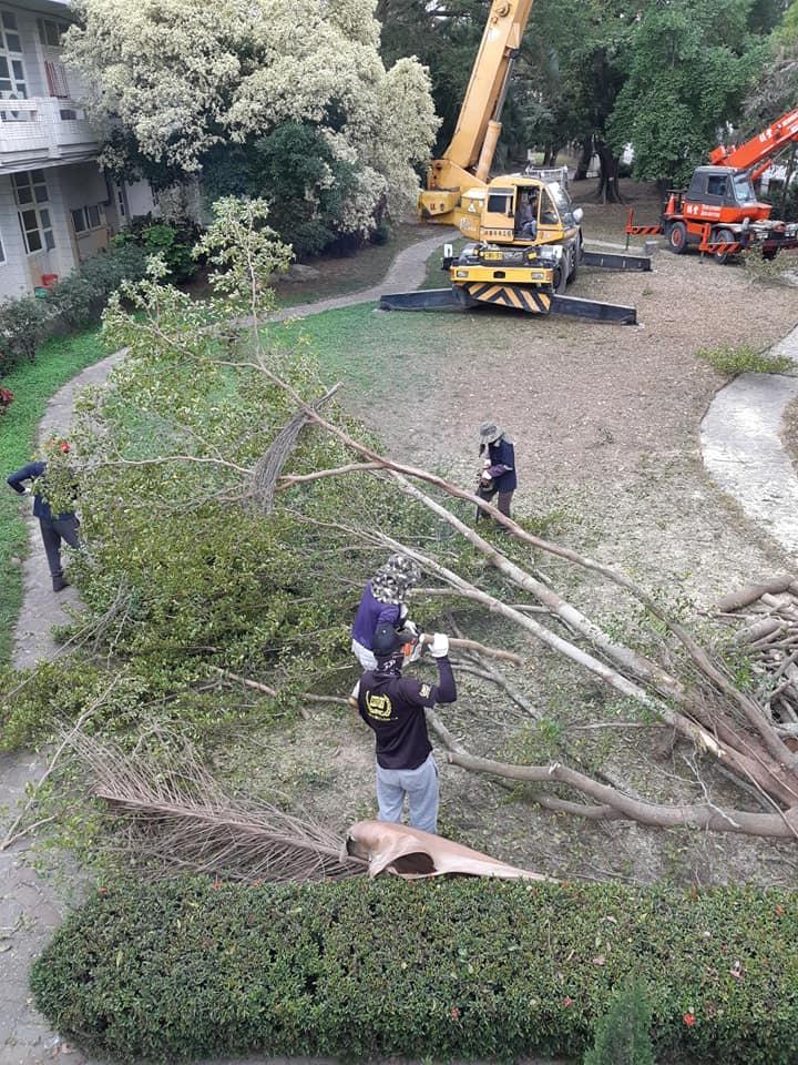 砍樹 雲林