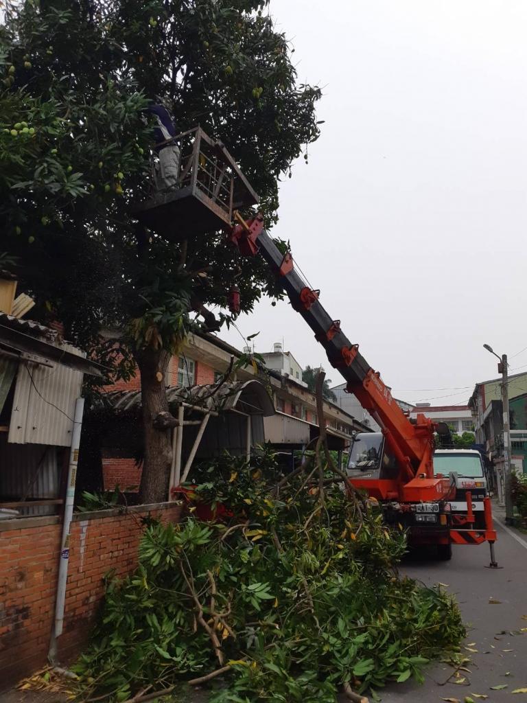 修剪樹木 雲林