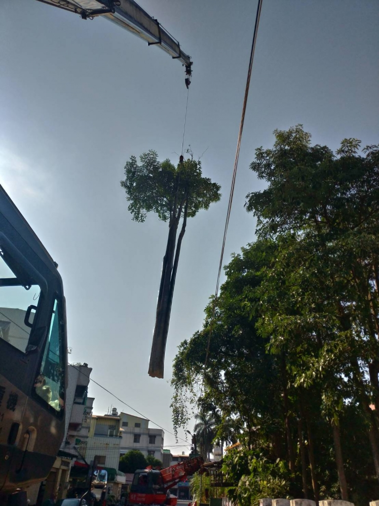 樹木砍伐 雲林