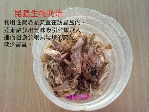 昆蟲生物防治管理