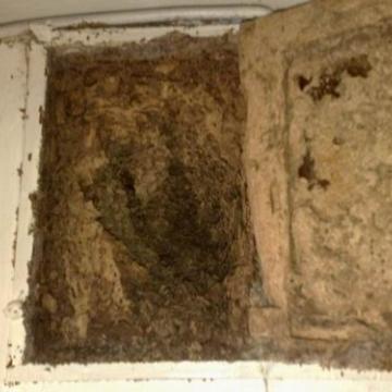 白蟻的生態