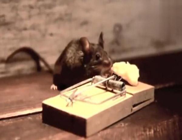 特殊防鼠工程