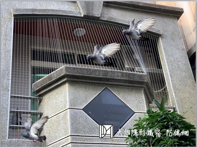 防鴿網  陽台老被鴿
